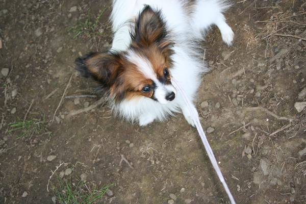 犬達5月3日 ブログサイズIMG_1577