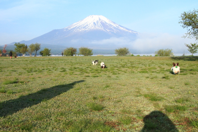 IMG_8202山中湖山中湖