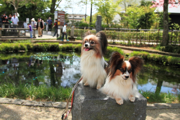 IMG_8370山中湖山中湖