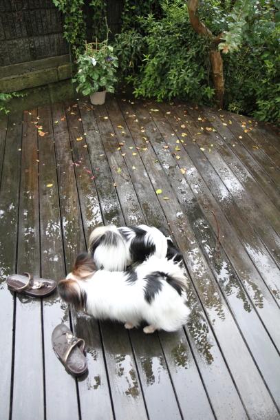 IMG_9641雨のひ雨のひ