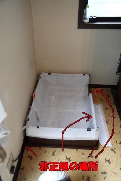 IMG_9638雨のひ雨のひトイレ2