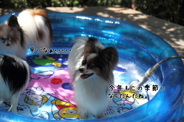 IMG_0052プール開きプール開き