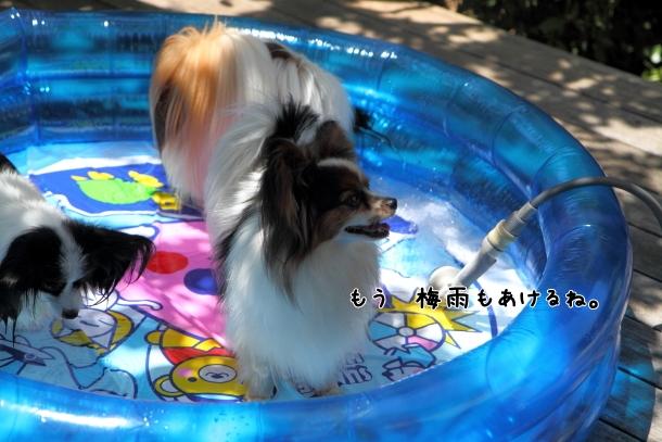 IMG_0051プール開きプール開き