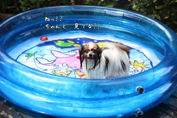 IMG_0123プール遊びプール遊び