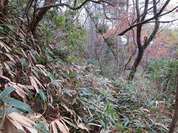 熊笹道下山