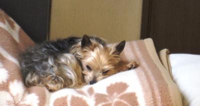 その時、こっちで寝てた