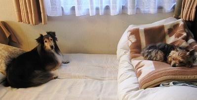 寝場所の位置