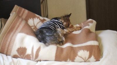 毛布好き7