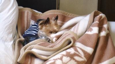 毛布好き8