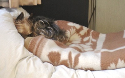 毛布好き9