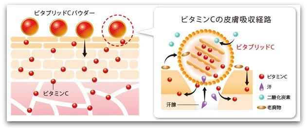 ビタブリッドC 角質層に浸透するシステム