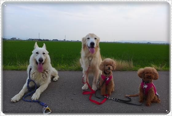 2015,6,24お散歩1
