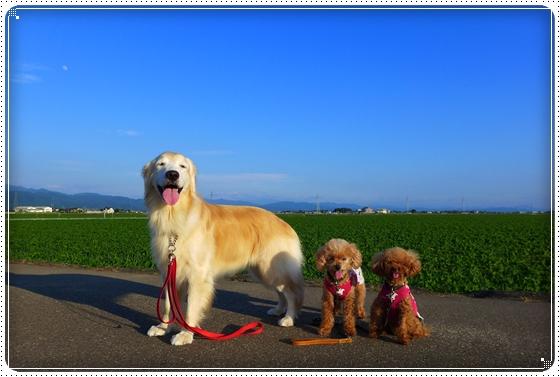 2015,6,29琵琶湖1
