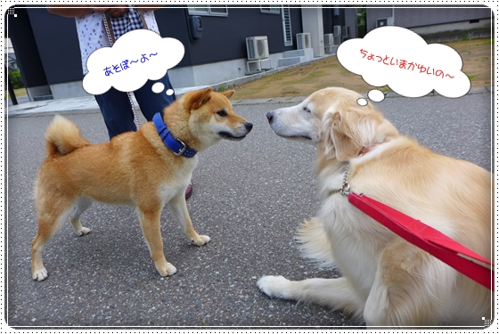 2015,7,1お散歩9