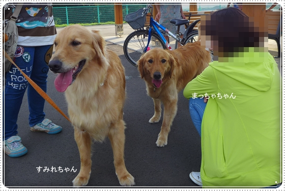 2015,7,11お散歩9