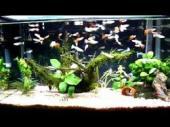 熱帯魚の水槽 (2)