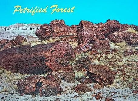 化石の森⑦