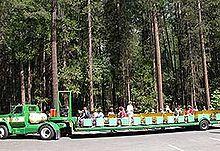 ヨセミテ渓谷を走るトラム(トロッコ列車)。