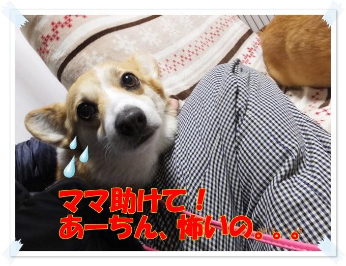 1-22DSCF67461.jpg