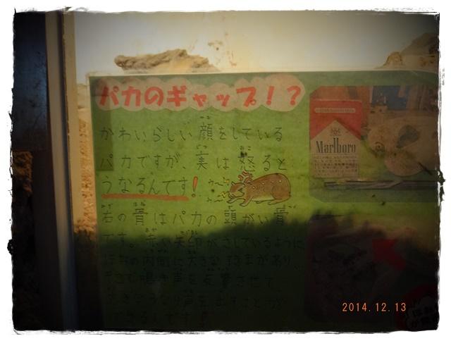12-20DSCF5420.jpg