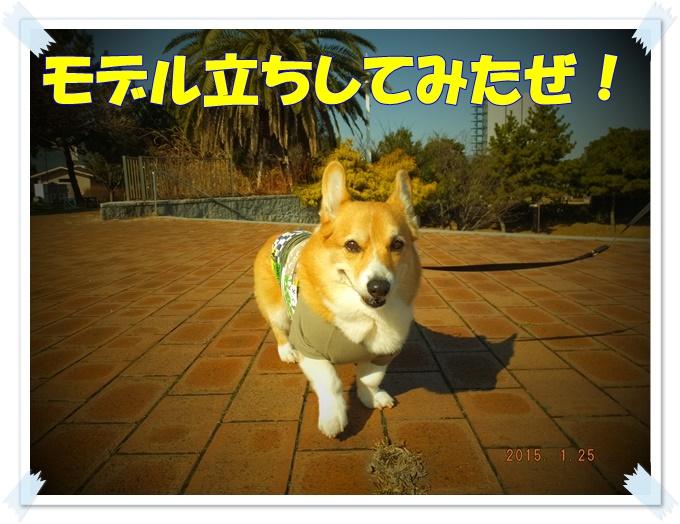 2-3DSCF6841.jpg