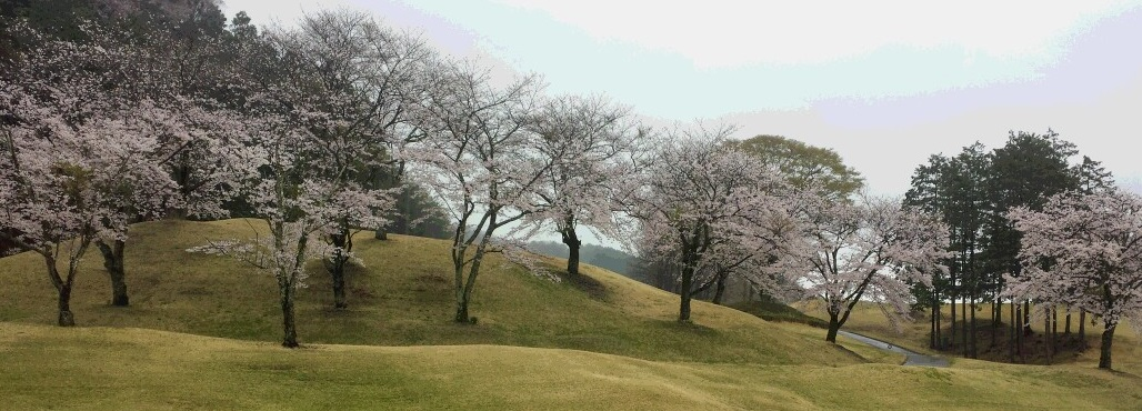 桜のゴルフ場