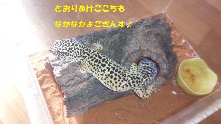 20141229-22[1]_convert_20150115125602