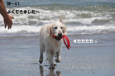 DSC_0255_convert_20150625171740.jpg