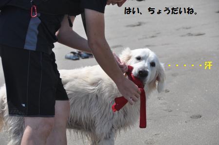 DSC_0260_convert_20150625171806.jpg