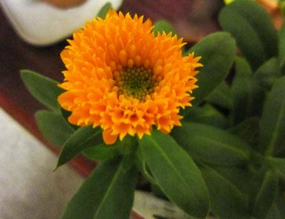 キャラメルオレンジ