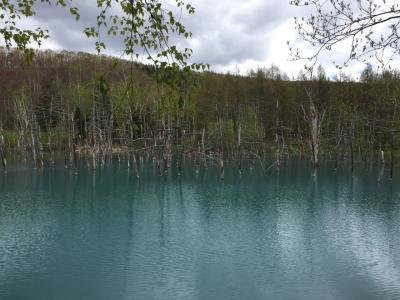 美瑛・神秘の青い池A