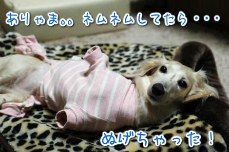 20141230235509.jpg