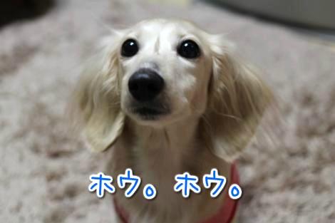 20150222022110.jpg