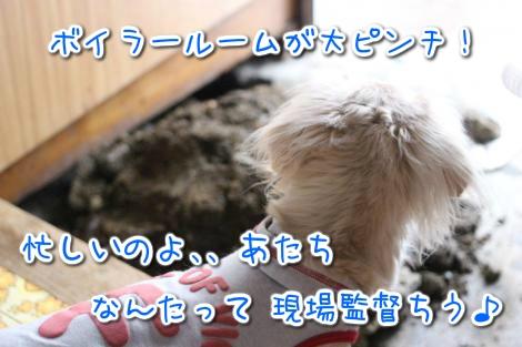 20150320164649.jpg