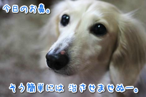20150320165507.jpg