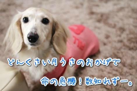 20150322101112.jpg
