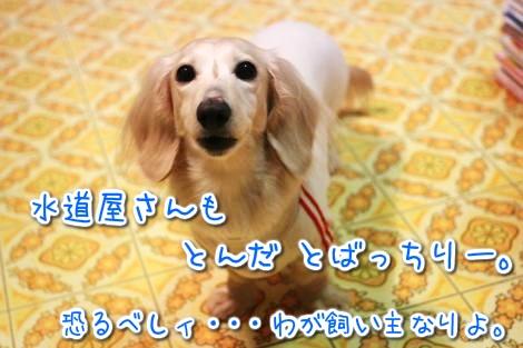 20150325200907.jpg