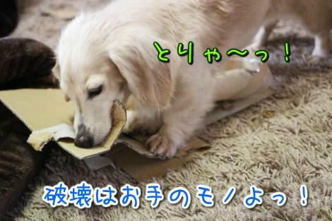 20150328183121.jpg