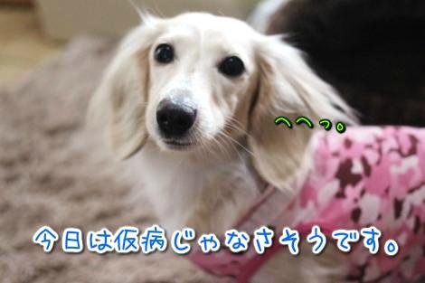 20150331185051.jpg