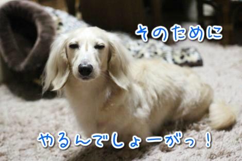 20150411011021.jpg