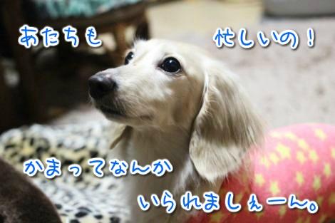 20150414031213.jpg