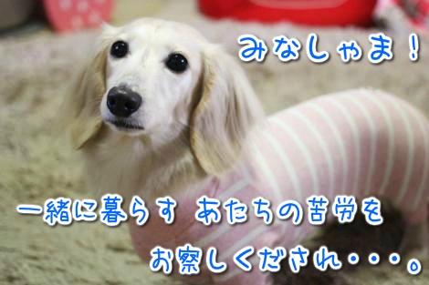 20150425010620.jpg