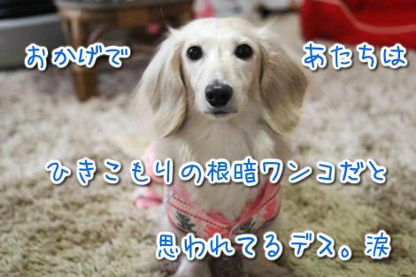 20150427092050.jpg