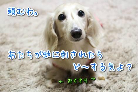 20150501212444.jpg