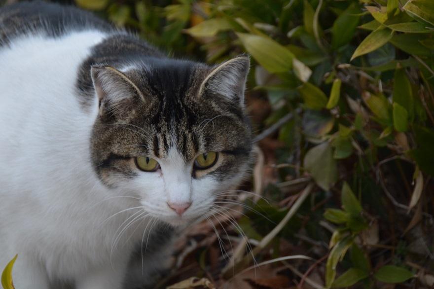 新・猫の日 (1)