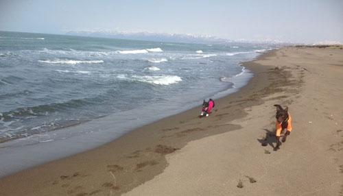 海は広いな~