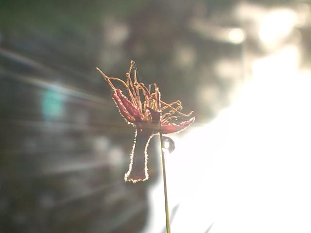 0420-3.jpg