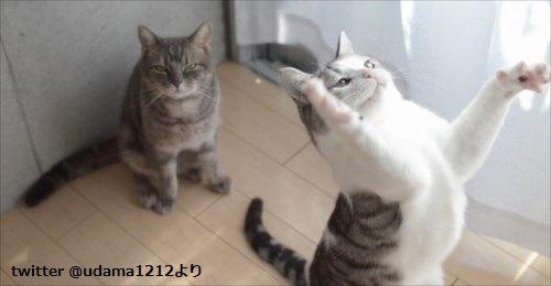 運動オンチなネコの決定的瞬間がかわいすぎると話題に 4枚