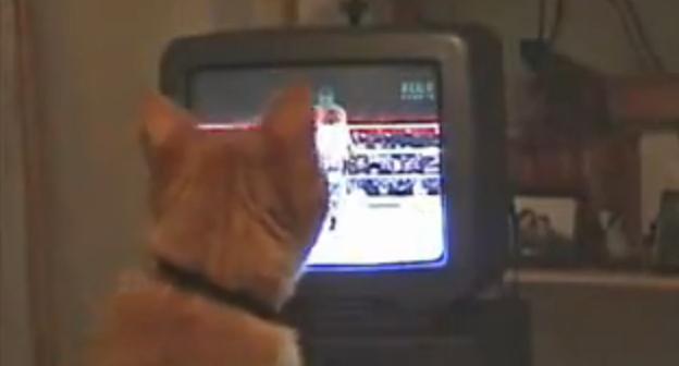 ボクシングを見ていたネコが急にネコパンチの練習を始めた