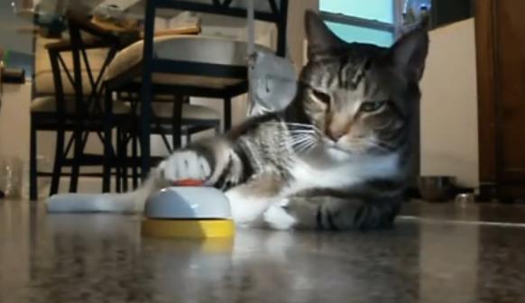 ネコ殿!ネコが「チン」を鳴らしたらオヤツをあげるように訓練したらこうなった